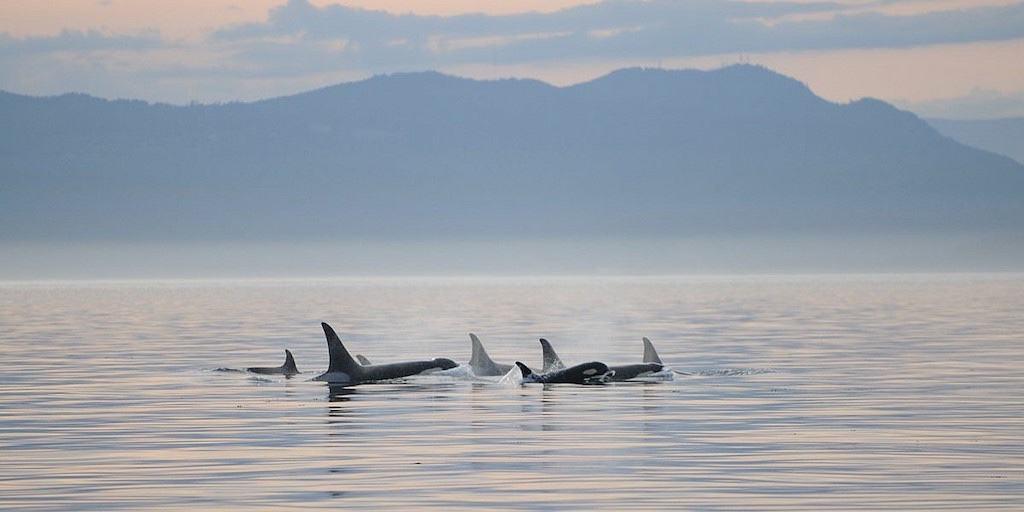 Ocean Ecoventures